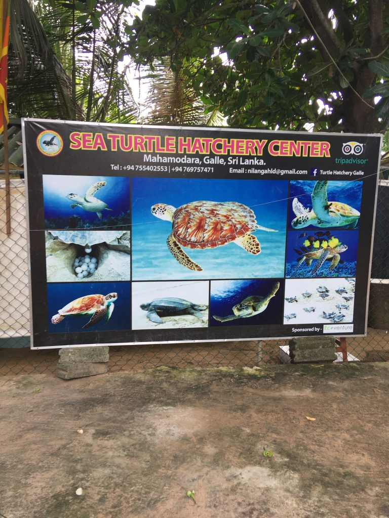 Sea Turtle Hatchery Center