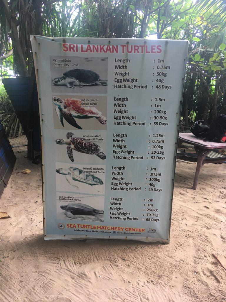 tipos de Tortugas en Sri Lanka