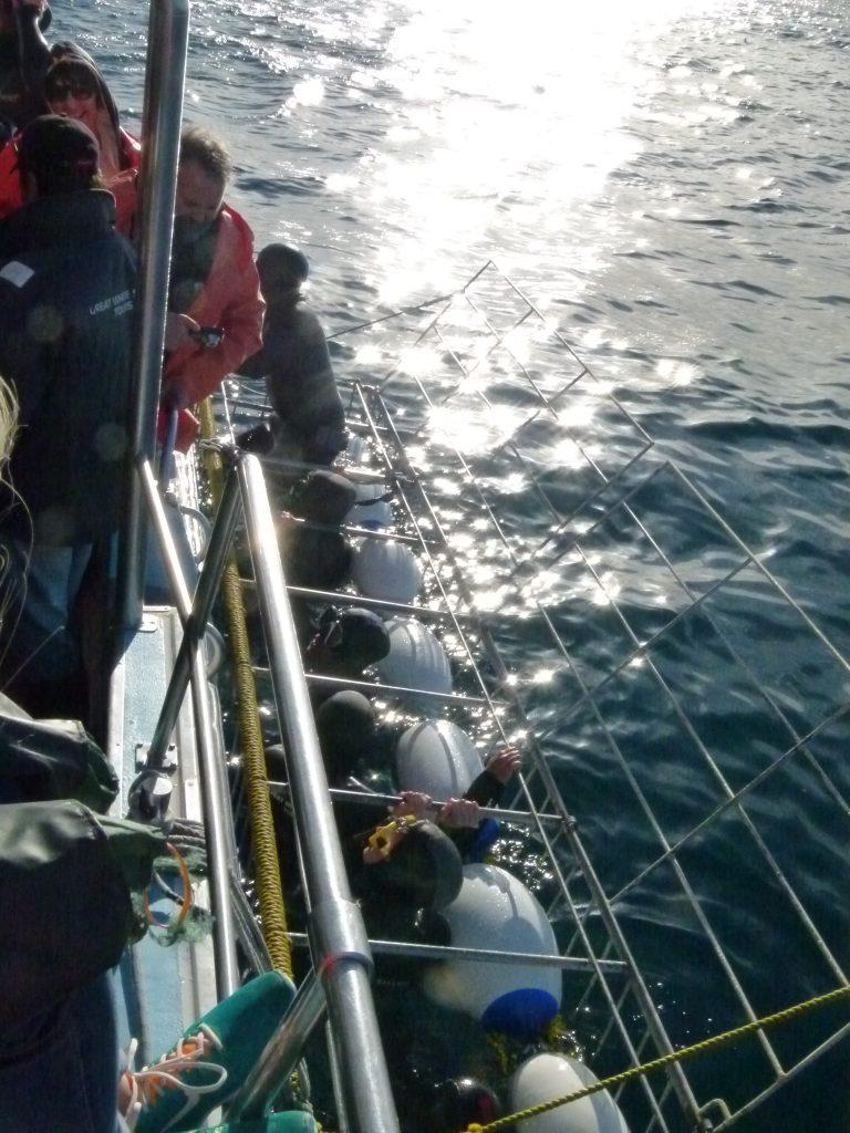 Jaula de observación del tiburón blanco