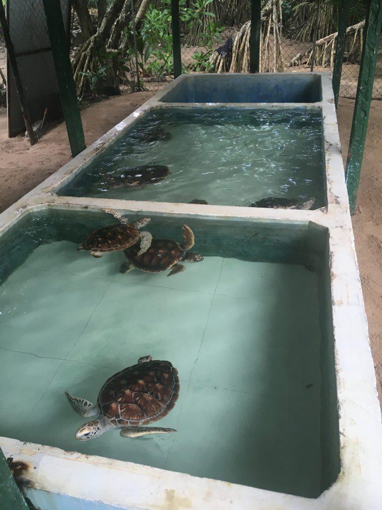 Tortugas en las piscinas