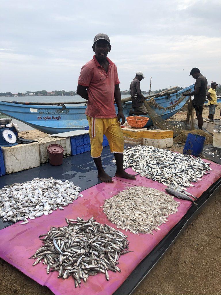 Mercado pescado Galle
