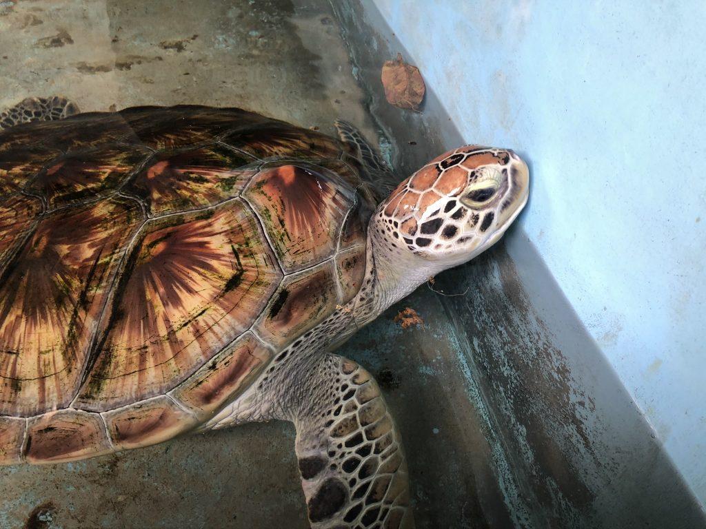 Tortuga Sri Lanka