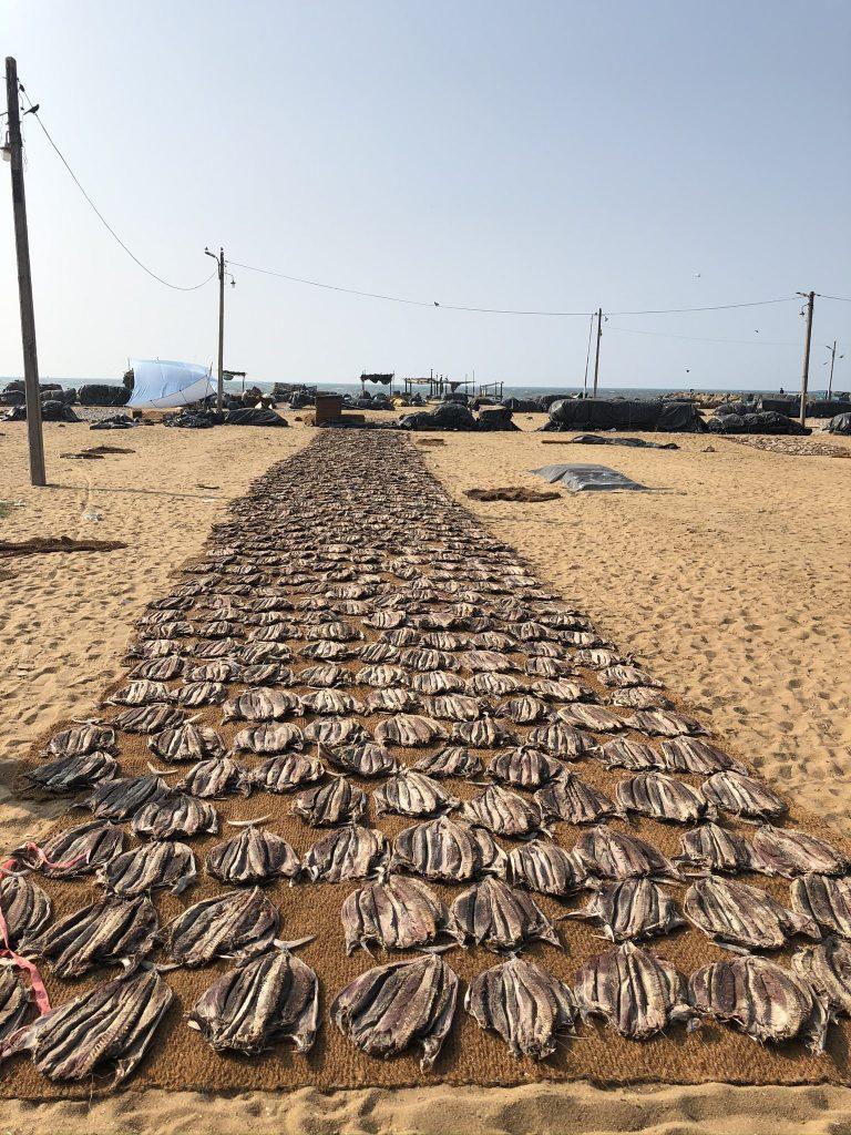 Mercado de pescado Negombo