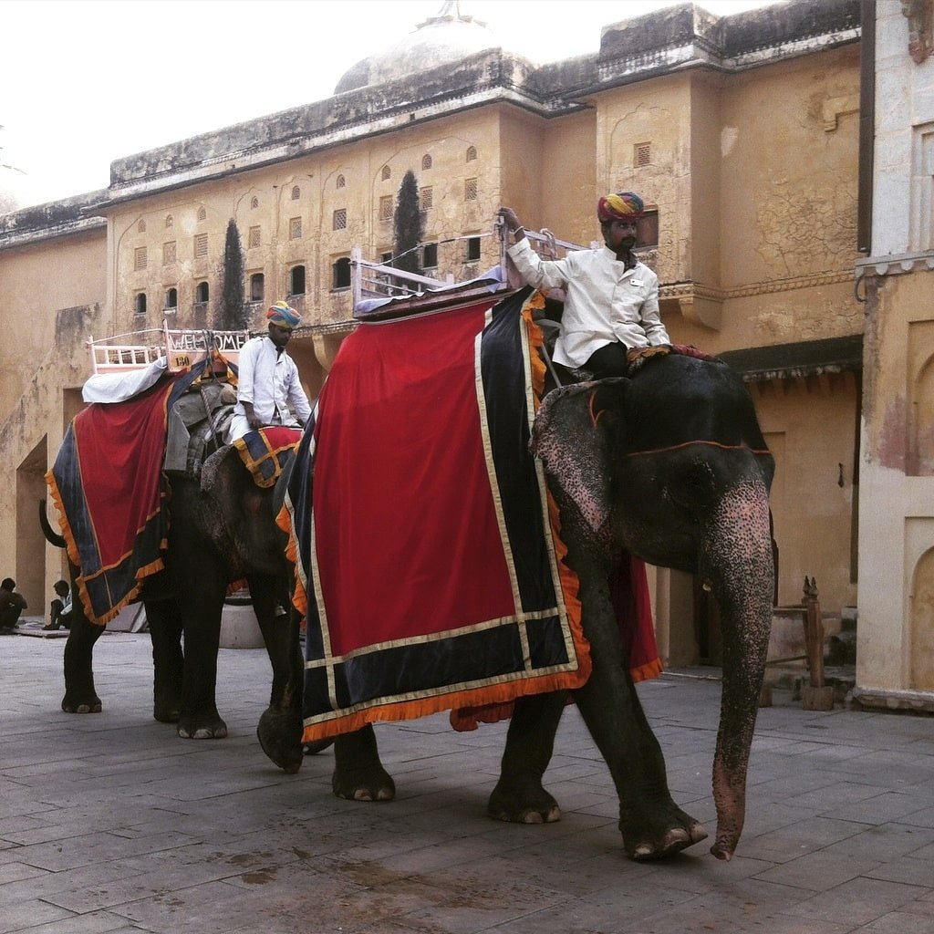 Elefantes en el Fuerte Amber