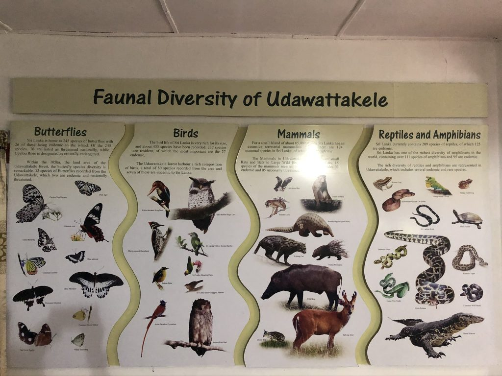 Museo-Udawattakele-Forest-Reserve
