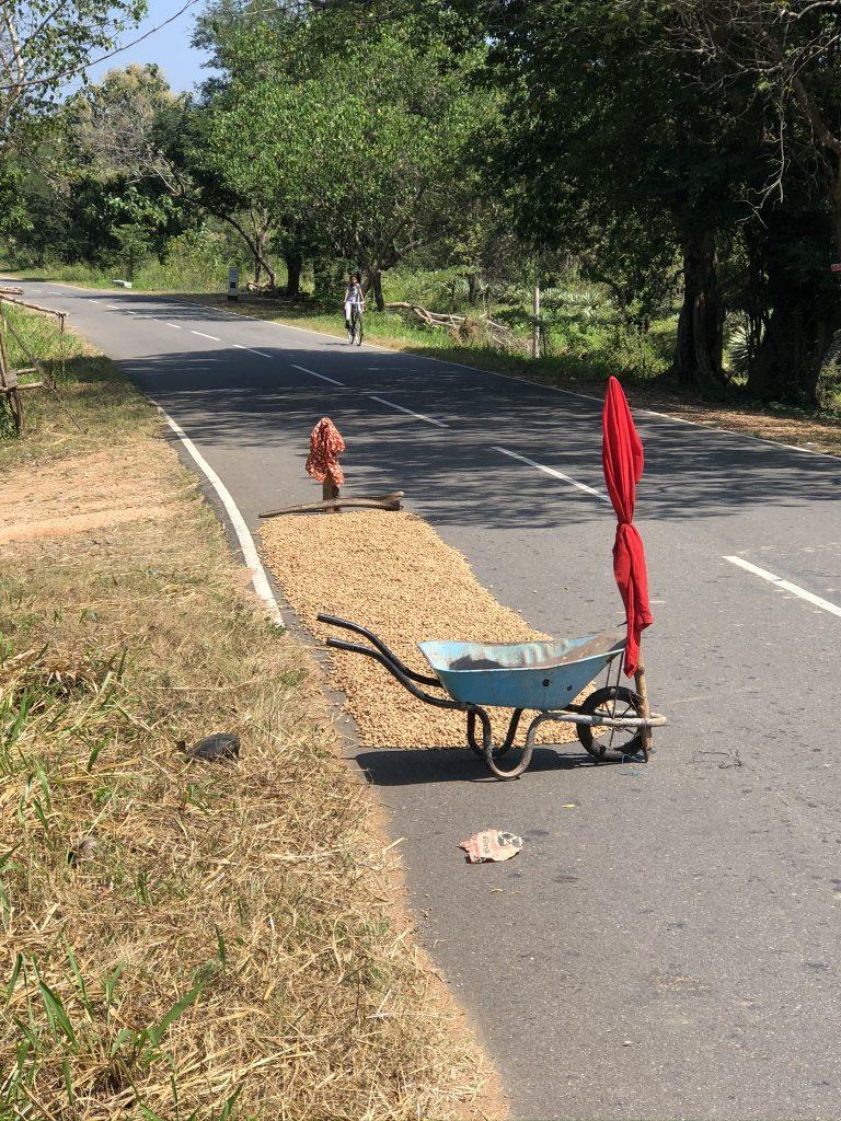 Secado-de-arroz-en-la-carretera