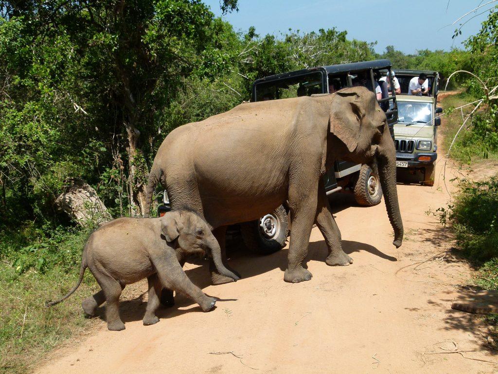 elefante-y-cria-Yala