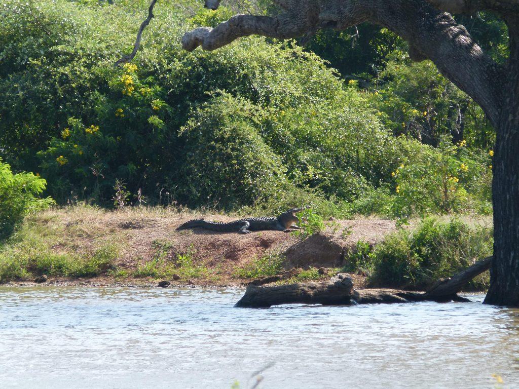 Cocodrilo Safari en Yala