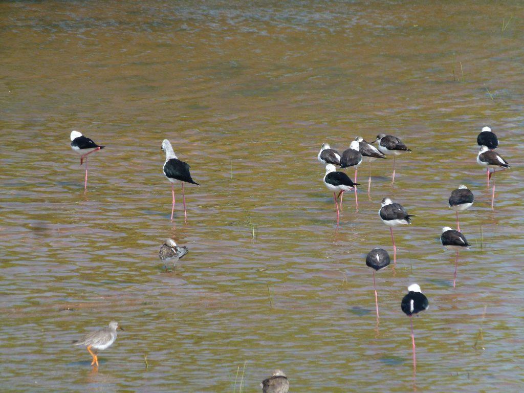 Aves en Yala