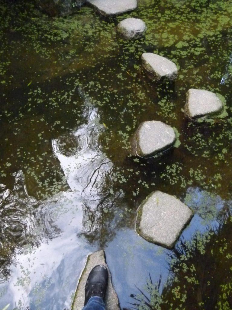 Piedras en el lago