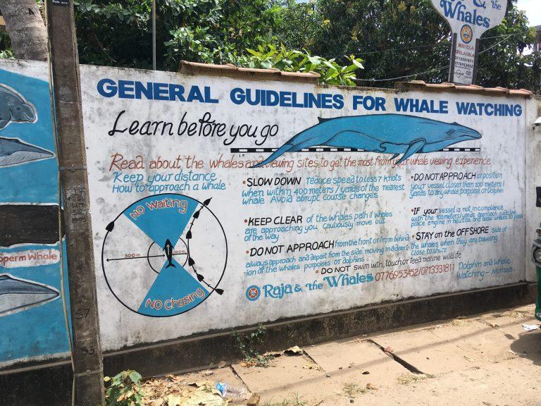 Guía avistamiento ballenas